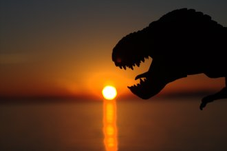 Rex Sunset
