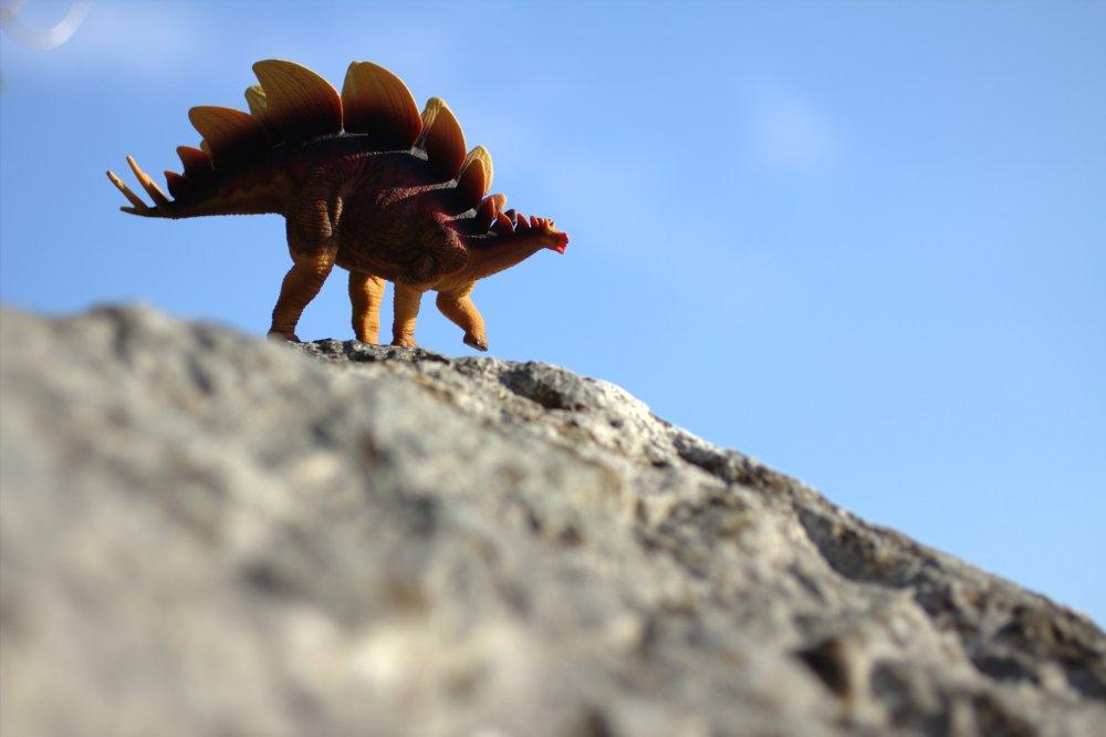Safari Stegosaurus2